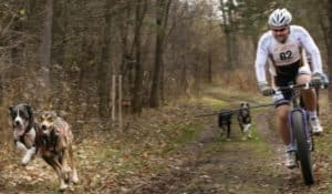 Bikejoring With Your Dog