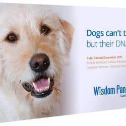 Best Dog DNA Test Kit