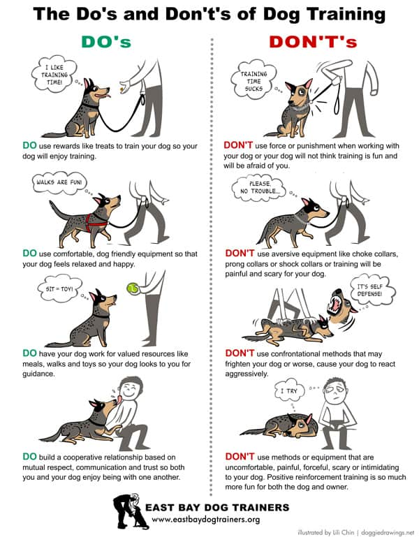 How to Leash Train Dog