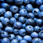 Can Dogs Eat Blueberries? 18 Reasons to Feed Your Dog Blueberries