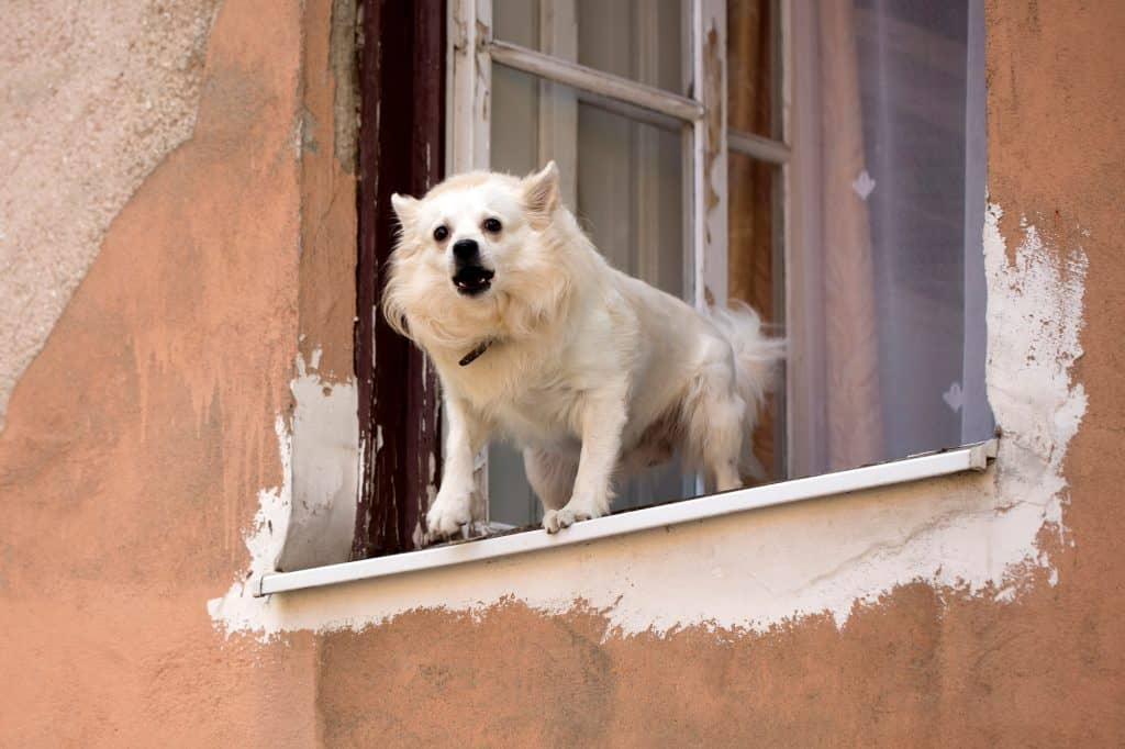 How to Stop Dog From Barking At Window