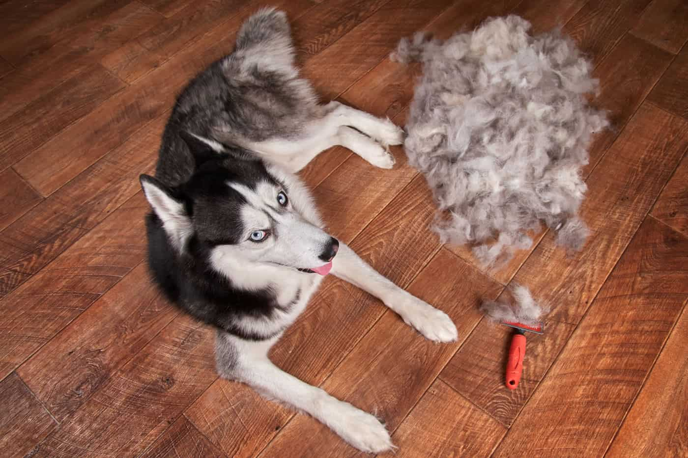 Best De-Shedding Tool for Husky