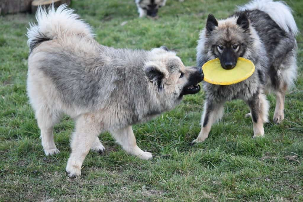 Best Frisbee for Dogs