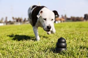 Best Pitbull Toy