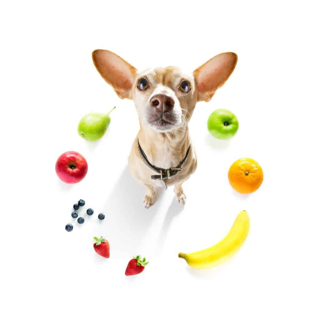 Can Dogs Eat Fruits