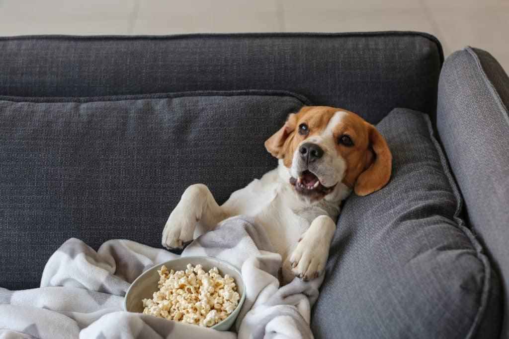 Can Dogs Eat Salted Popcorn