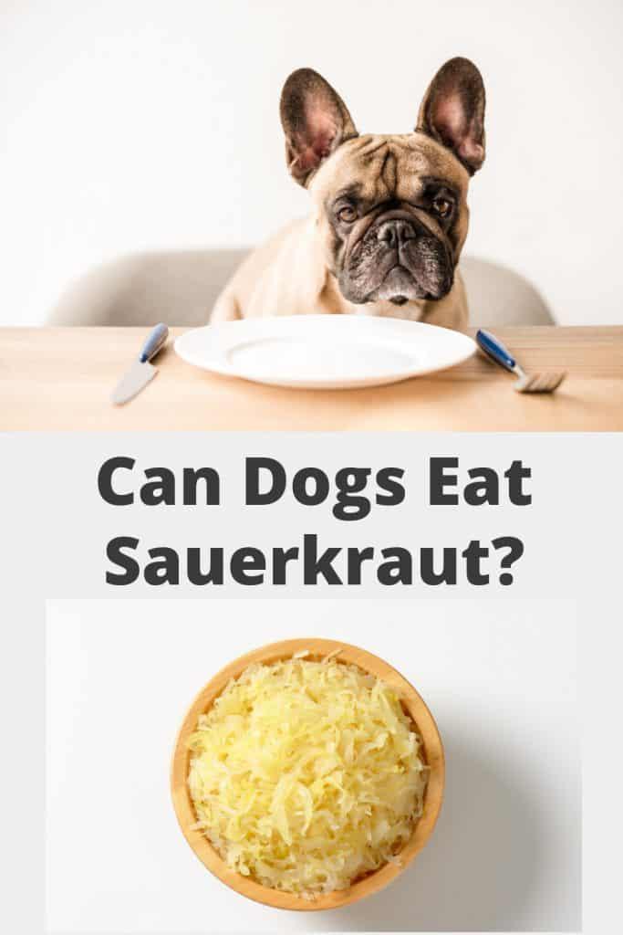 Can Dogs Eat Sauerkraut Pin