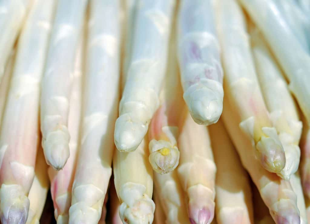 Can Dogs Eat White Asparagus