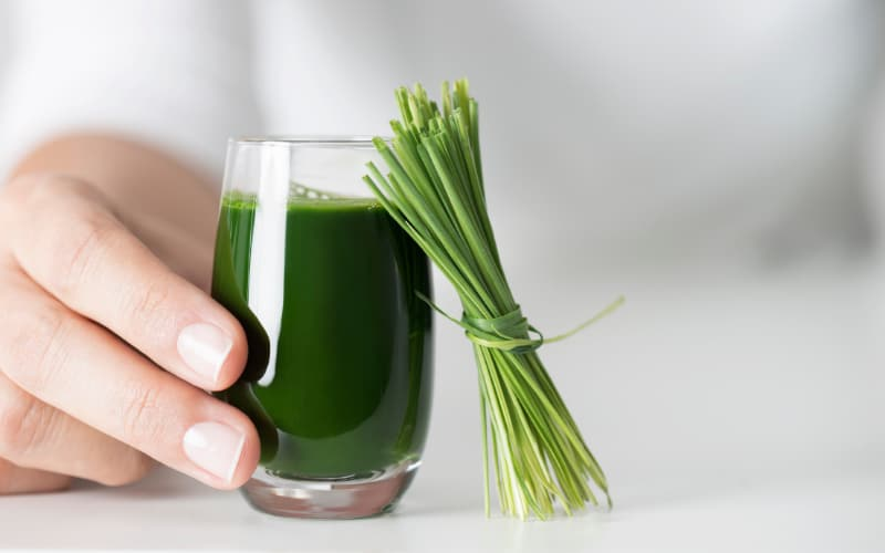 Can Dogs Have Wheatgrass Juice