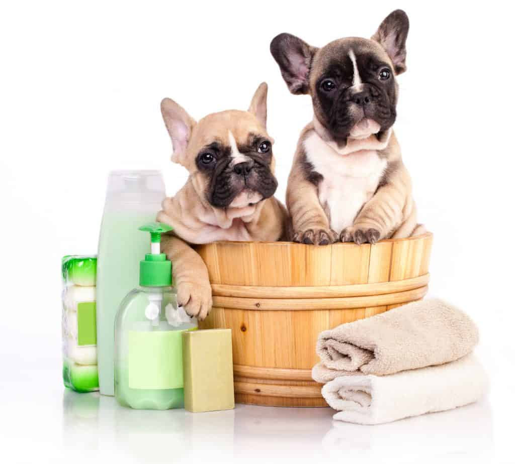 Do Dogs Need Conditioner