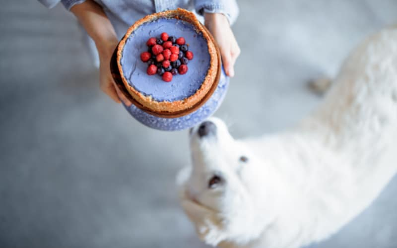 Dog With Cheesecake