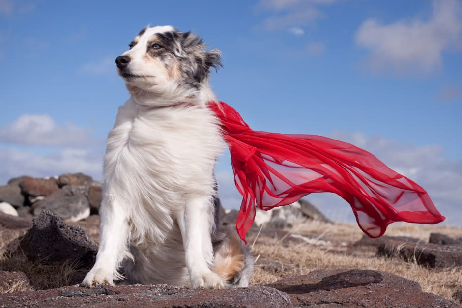 Dogs Are Heros