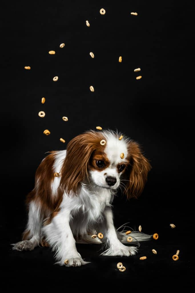 Give Dogs Cheerios As Treats