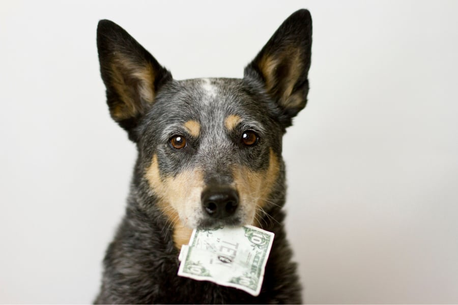 How Much Does It Cost To Ship A Dog