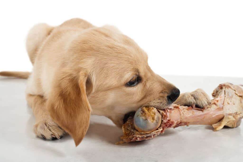 How Much Raw Food To Feed Puppy