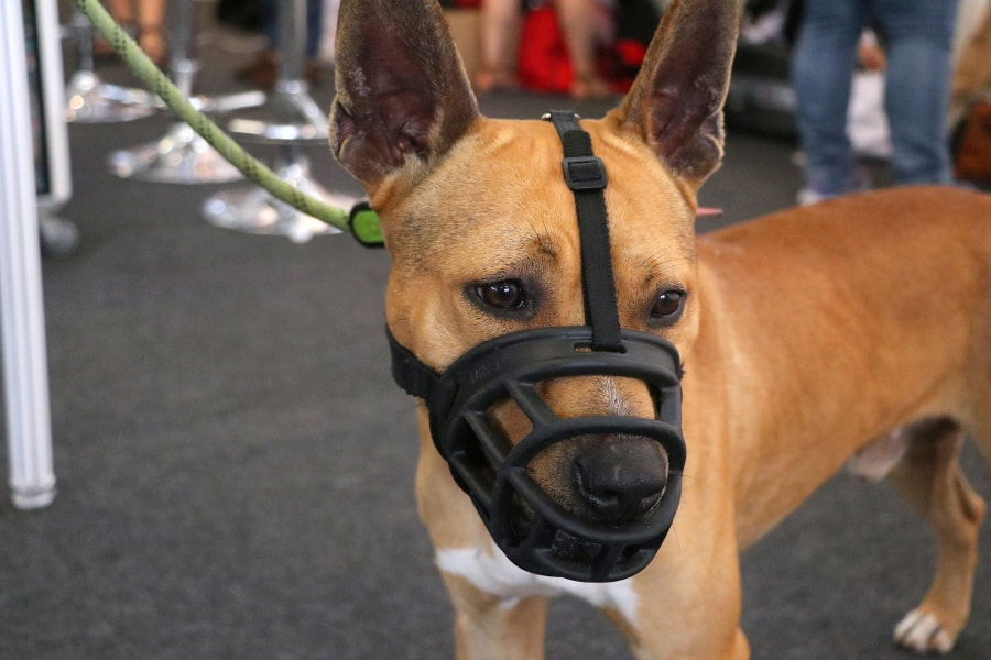 Measure Dog For A Muzzle