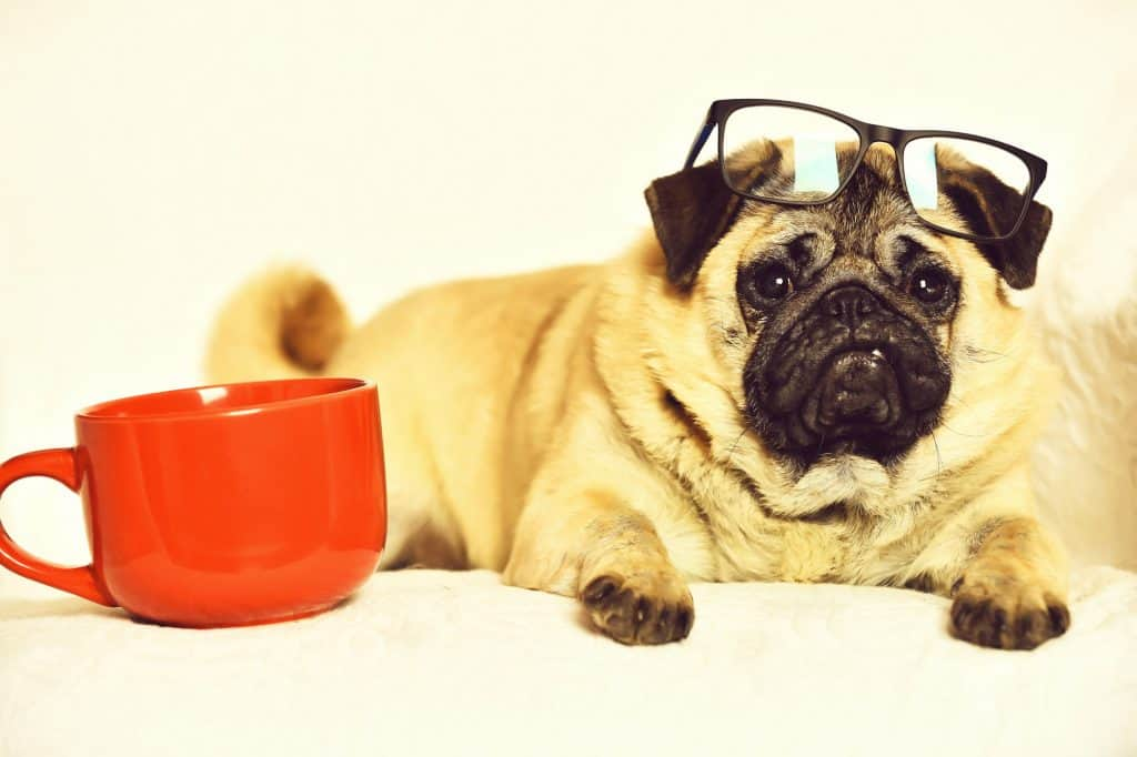 Pug With A Coffee Cup
