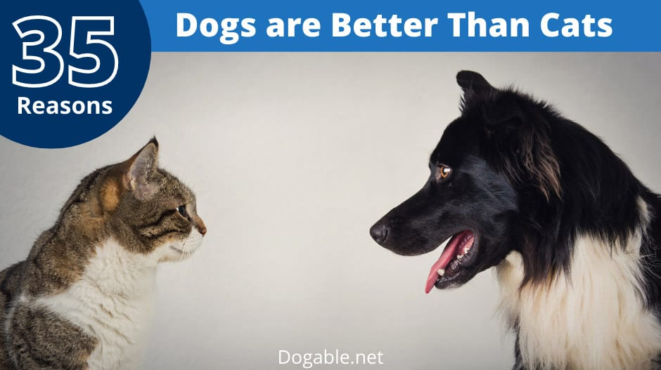 Reasons Dogs Are Better Than Cats