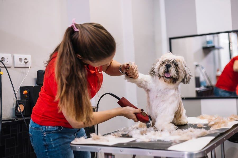 Sharpen Dog Clippers