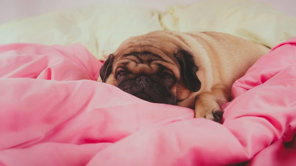 Why Dogs Sleep With Eyes Open