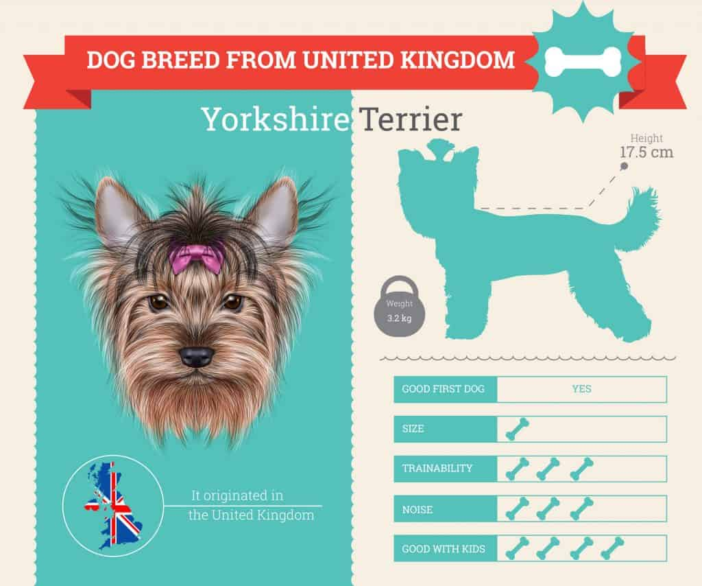 Yorkshire Terrier Infographic